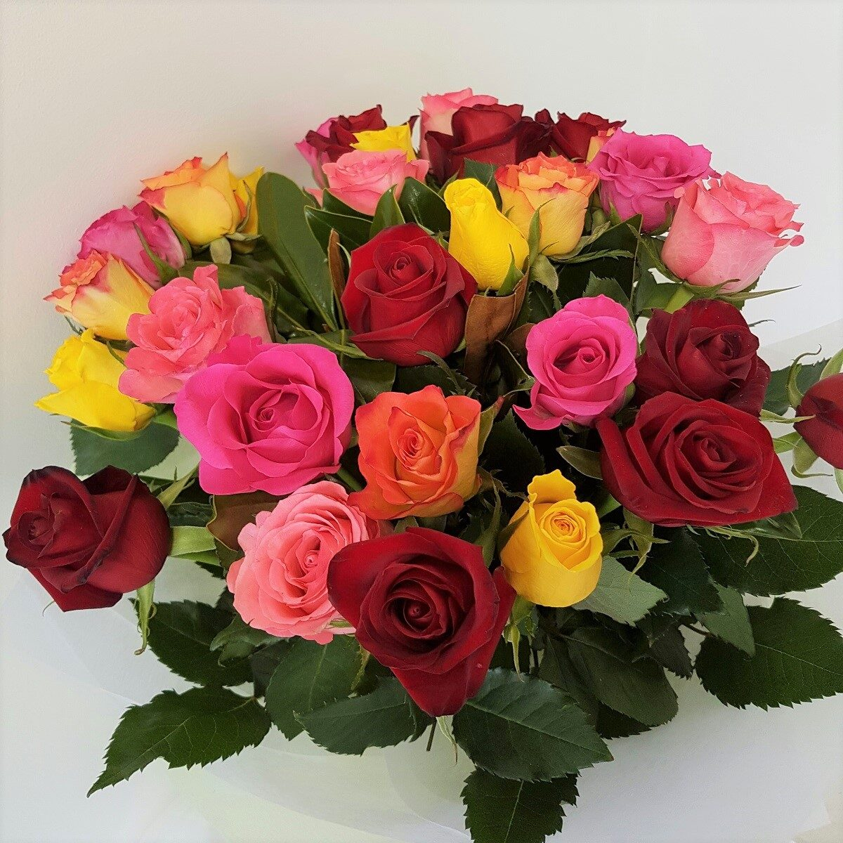 Coloured roses